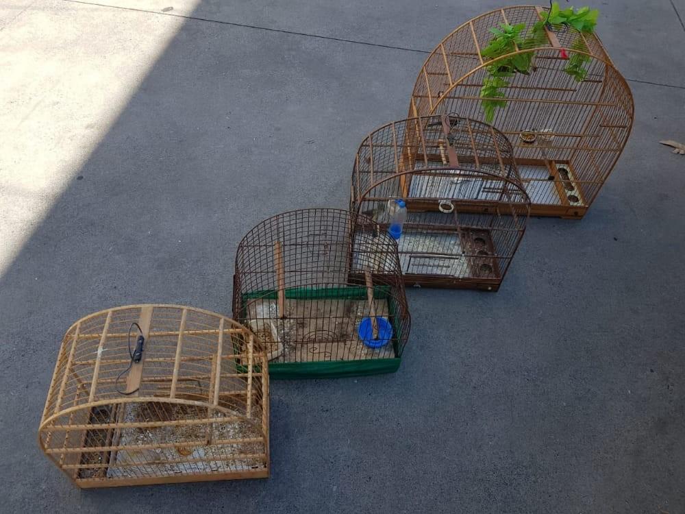 Polícia Militar apreende quatro pássaros silvestres em cativeiro em Morungaba