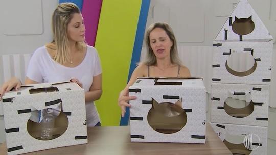 Foto: (Reprodução / TV Diário )