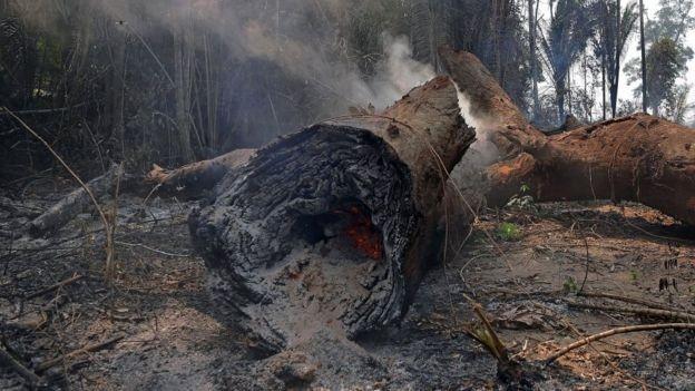 O desmatamento e as mudanças climáticas podem afetar a regeneração das áreas afetadas pelo fogo (Foto: Getty Images via BBC News)