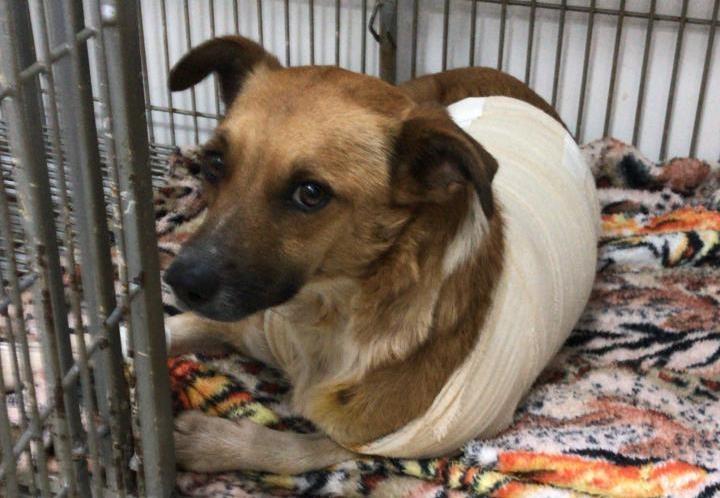 Cachorra é atingida por balas de borracha, e guarda prisional suspeito de atirar é afastado em Cascavel