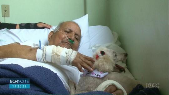 Vídeo: cadela visita dono, de 84 anos, internado em hospital no PR