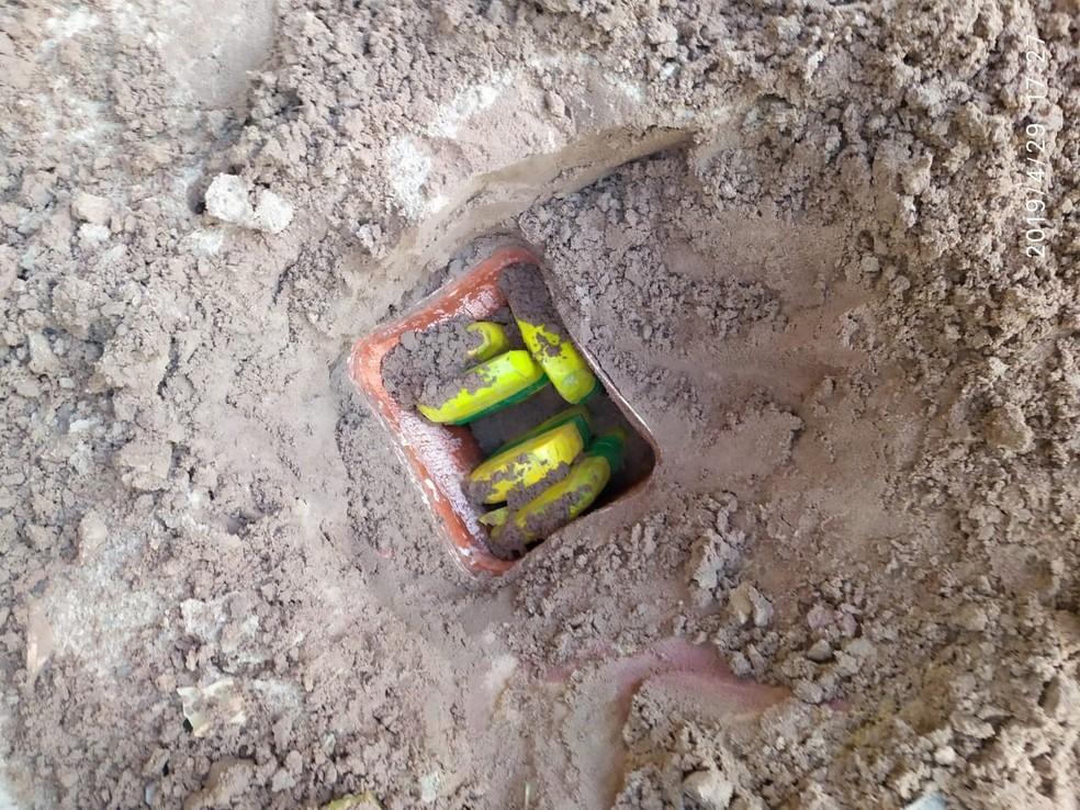 O entorpecente estava enterrado no quintal da casa de Rubenilson Silva, no bairro Floresta — Foto: Reprodução/Redes Sociais