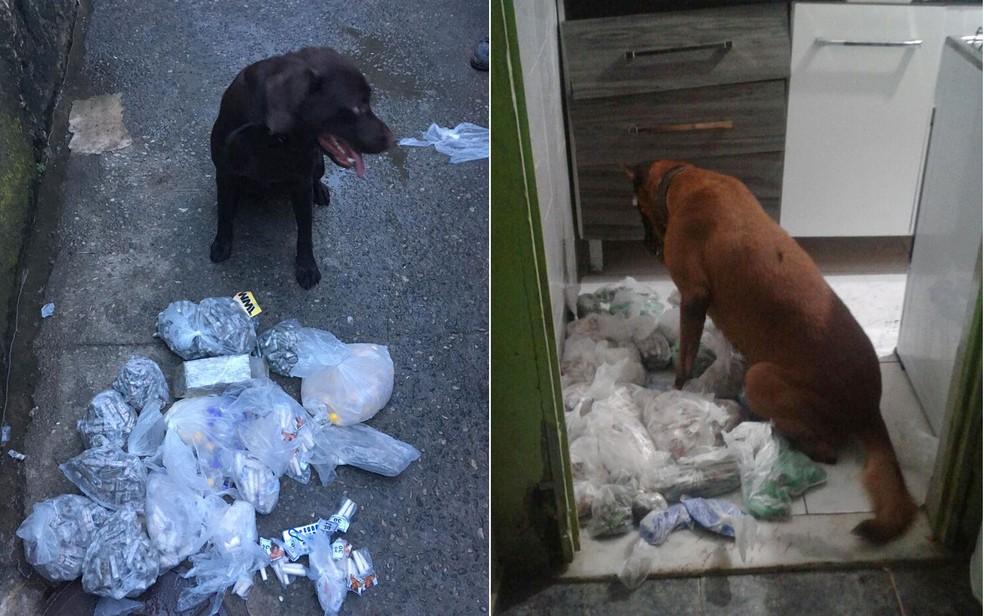 Cães encontraram drogas que foram apreendidas em operação na Cidade de Deus (Foto: Divulgação / Polícia Militar)