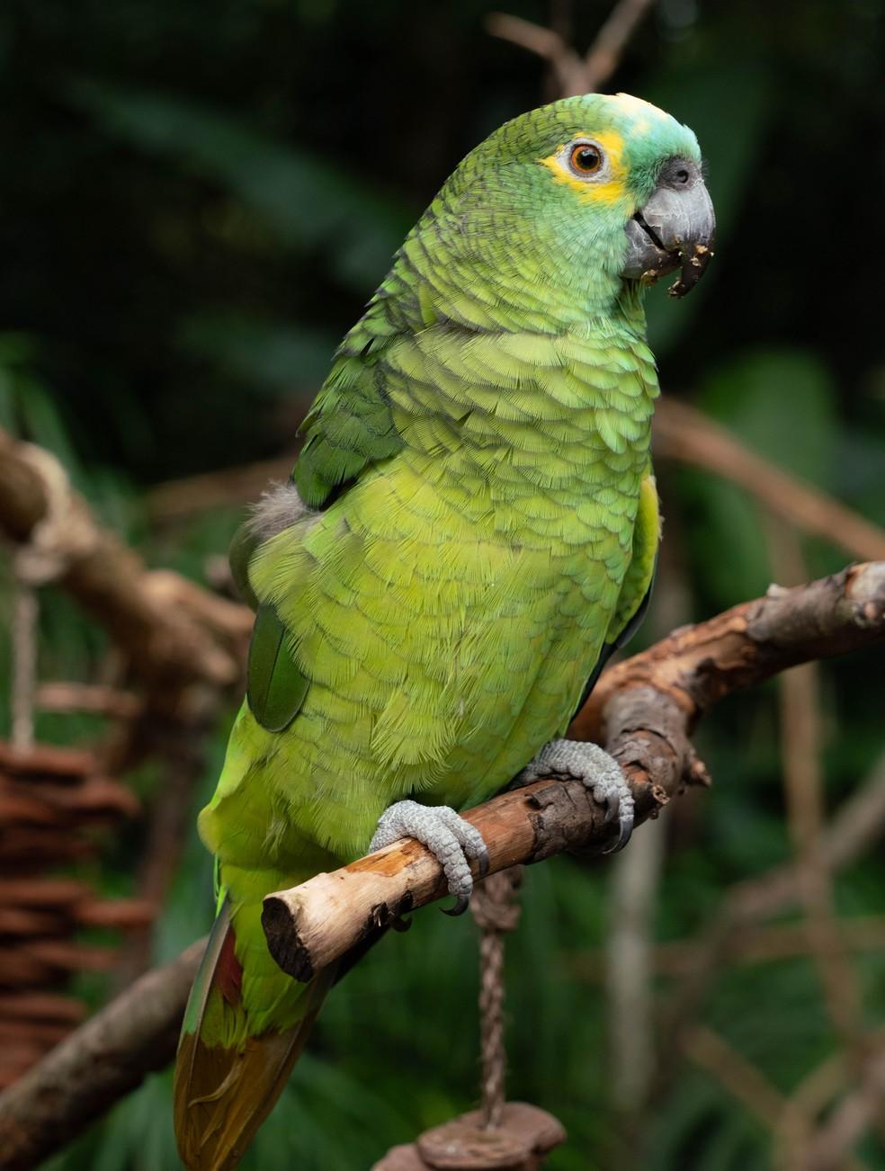Segundo especialista, muitas aves são resgatadas com ferimentos, vítimas de maus-tratos, e passam por recuperação no local — Foto: Divulgação/Parque das Aves