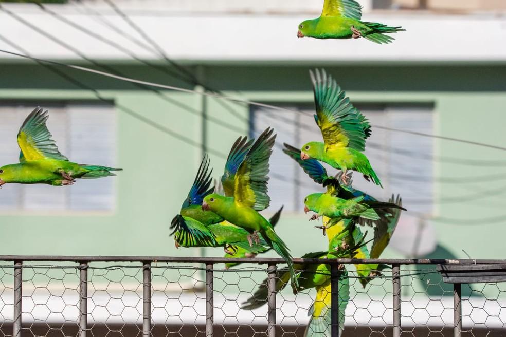 Observador de aves de São Paulo vai compartilhar ao vivo os visitantes alados — Foto: Ney Matsmura/ Arquivo Pessoal