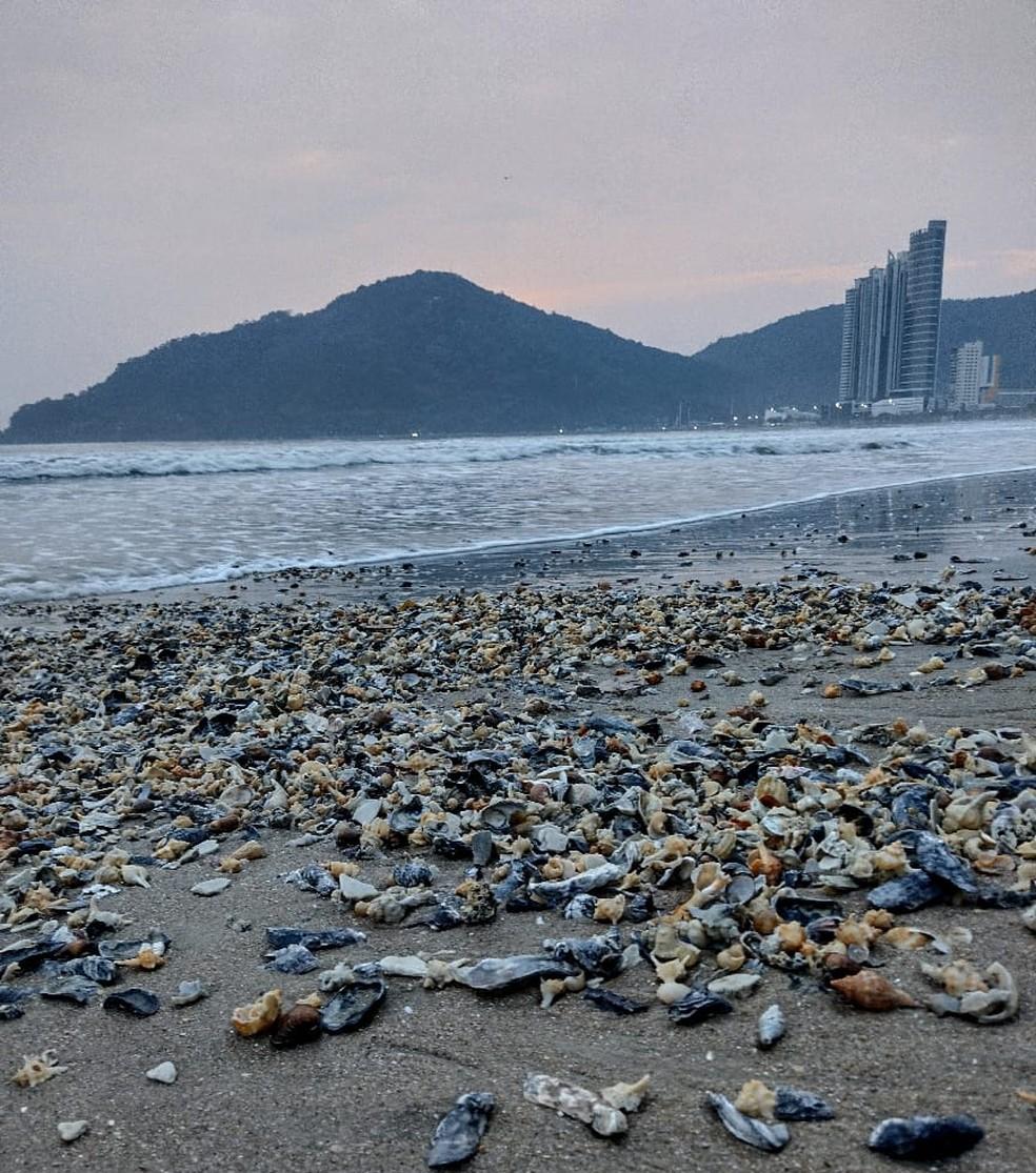 Conchas em Balneário Camboriú — Foto: Dariane Peres/Reprodução