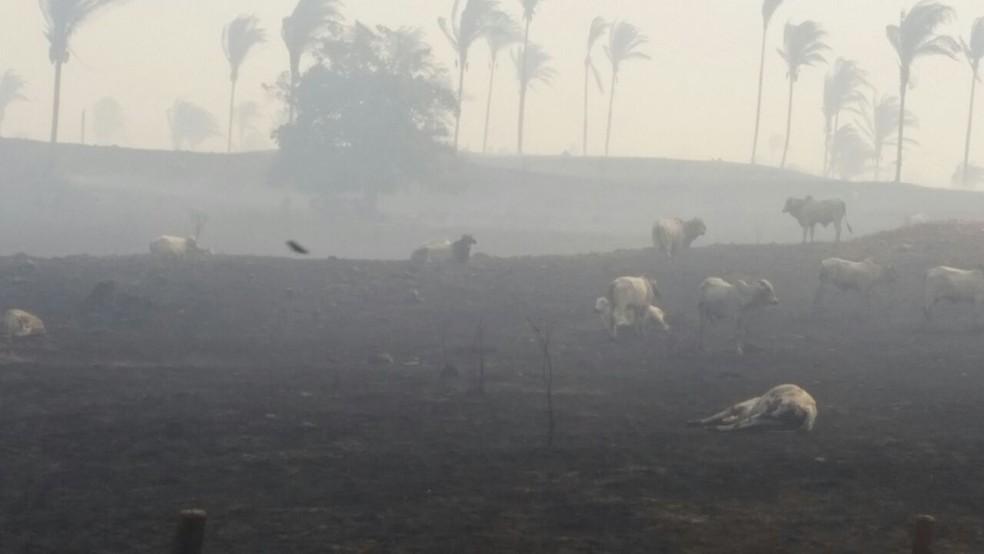 Cerca de 1 mil animais morreram devido incêndio na zona rural de Carmolândia (Foto: Divulgação )