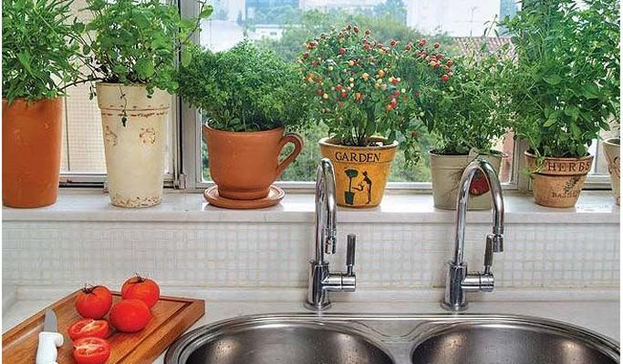 Mini-hortas em apartamentos pequenos: dicas para você criar a sua!