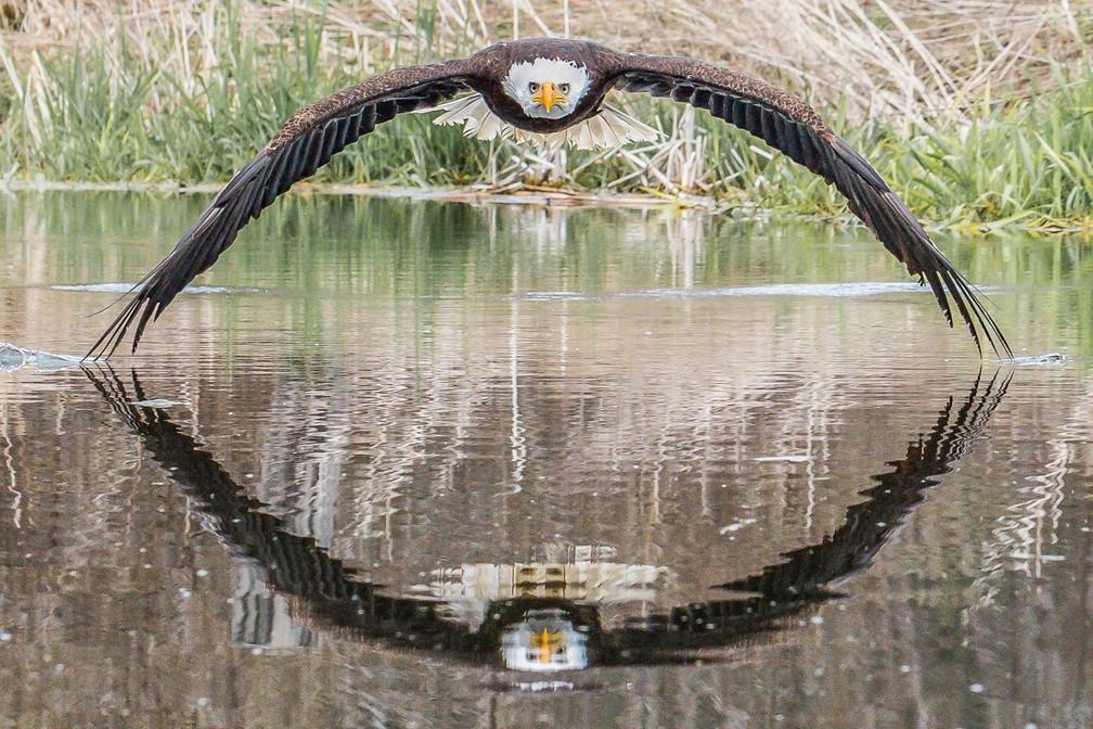 """Fotógrafo amador canadense diz estar """"maravilhado"""" pela repercussão mundial da imagem — Foto: Steve Biro/Arquivo pessoal"""