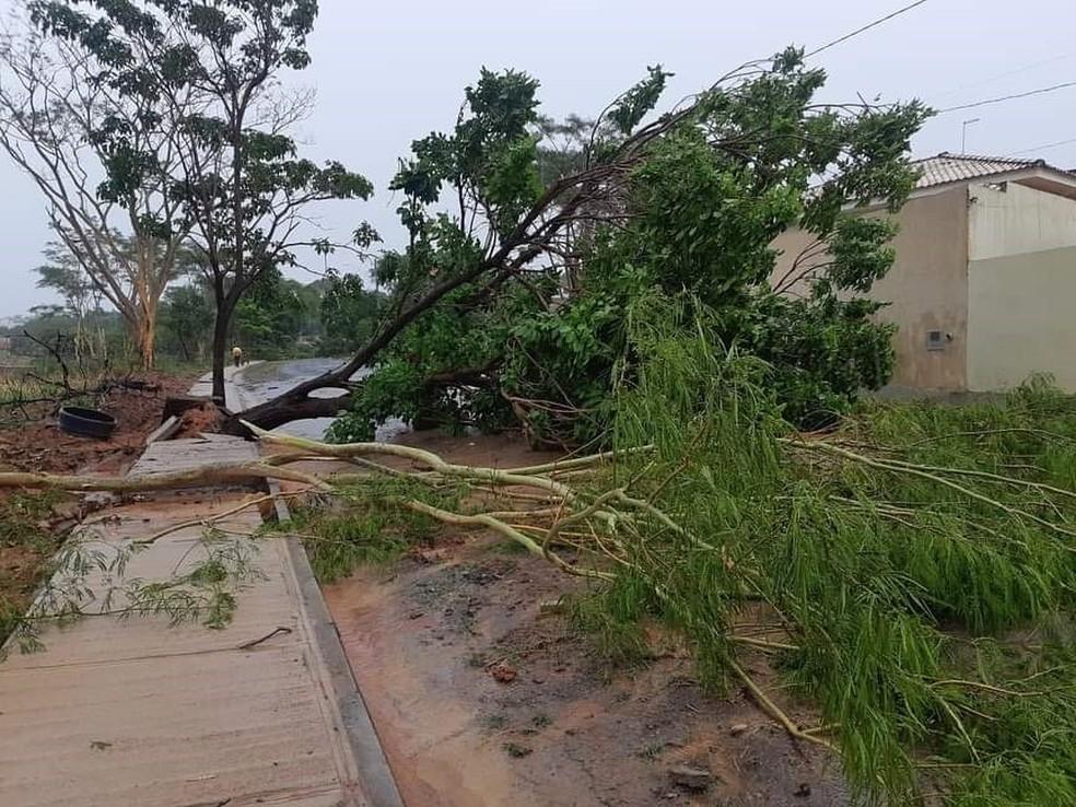 Árvore caiu em rua de Catanduva com a força do vento — Foto: Arquivo Pessoal