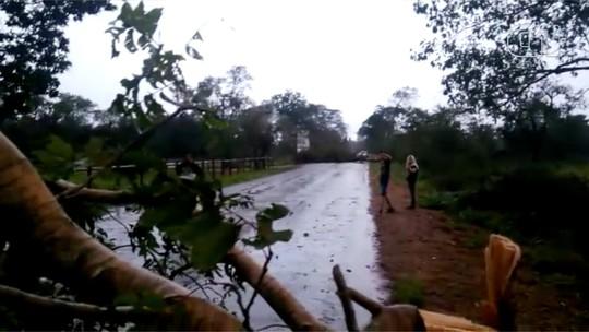 Trecho da Estrada Parque que dá acesso à UEMS é interditado após ventos fortes derrubarem árvores