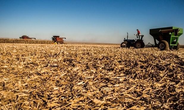 Clima faz estimativa da colheita de milho cair em 40%; analista diz que reflexos já são vistos há meses
