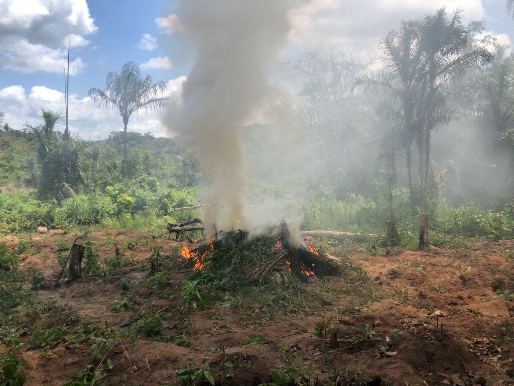 Polícia Federal destrói cerca de 4 toneladas de maconha durante operação no MA