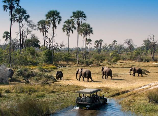 Safari em Botsuana (Foto: Divulgação)