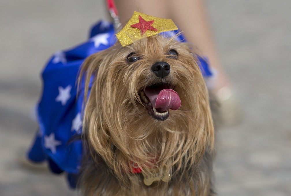 Com fantasia de 'mulher maravilha', cachorro aproveita bloco para animais no Rio (Foto: Silvia Izquierdo/AP)