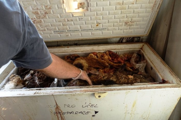 Pedaços dos animais abatidos eram deixados no local (Foto: Divulgação/CEI)