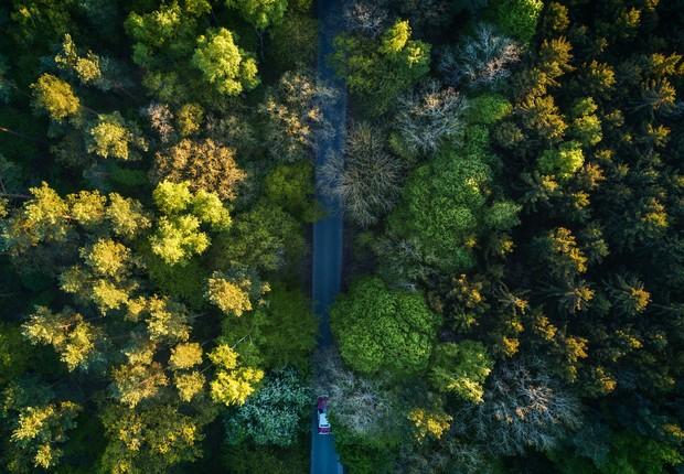 A empresa DroneSeed, com sede em Washington, trabalha com reflorestamento eficiente através de drones (Foto: Pexels)