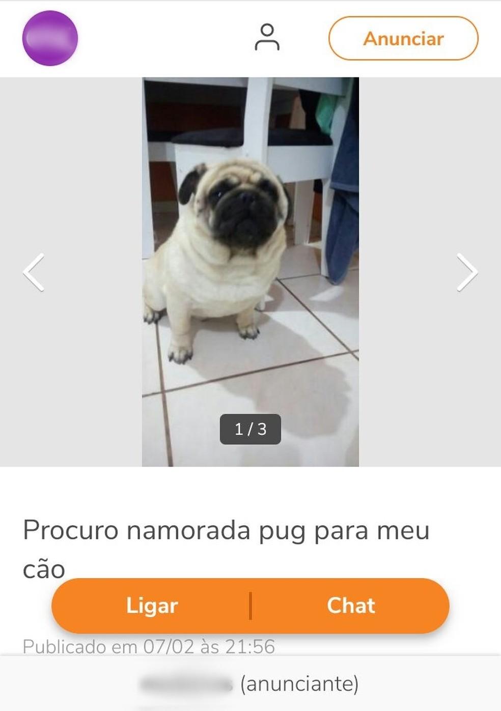 Moradora reconheceu cachorro perdido em anúncio em site (Foto: Arquivo Pessoal/Silmara Ribeiro)