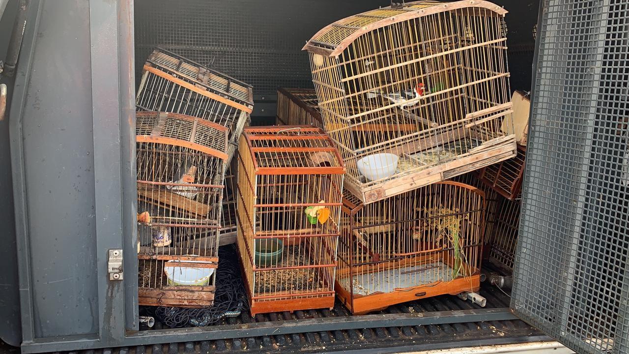 Cerca de 20 aves são apreendidas e dois homens são detidos por comércio ilegal, em João Pessoa