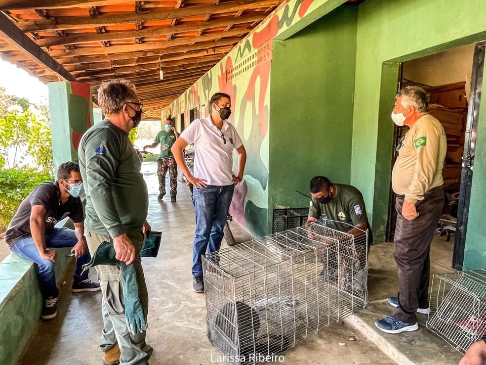 Macaco bugio estava atacando moradores em São Raimundo Nonato, no Piauí — Foto: Divulgação/Larissa Ribeiro