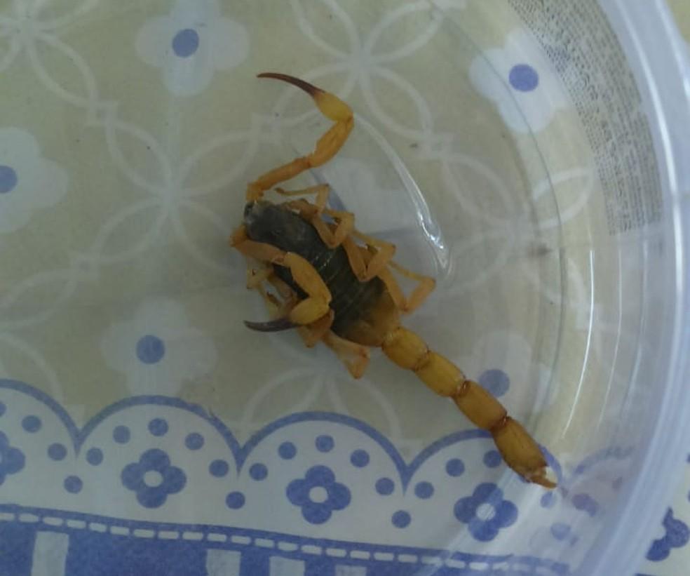 Menina de 11 anos foi vítima de escorpião amarelo em Lins — Foto: Arquivo pessoal/Augusto Sérgio dos Santos Brito
