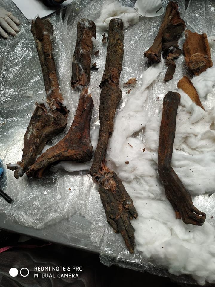 Restos de múmias encontrados em pacote que ia do Egito para a Bélgica (Foto: reprodução)