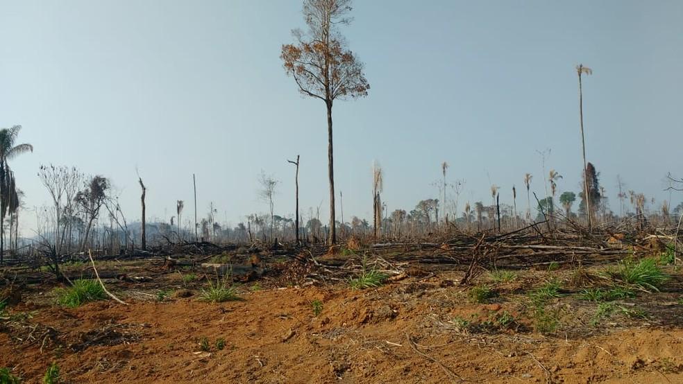 Ao todo, o grupo já derrubou e tocou fogo em mais de 5 mil hectares de área desmatada na fazenda.  — Foto: Reprodução/Polícia Civil do Pará