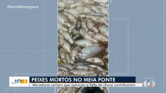 Laudo aponta baixa oxigenação da água como causa da morte de centenas de peixes, em Piracanjuba