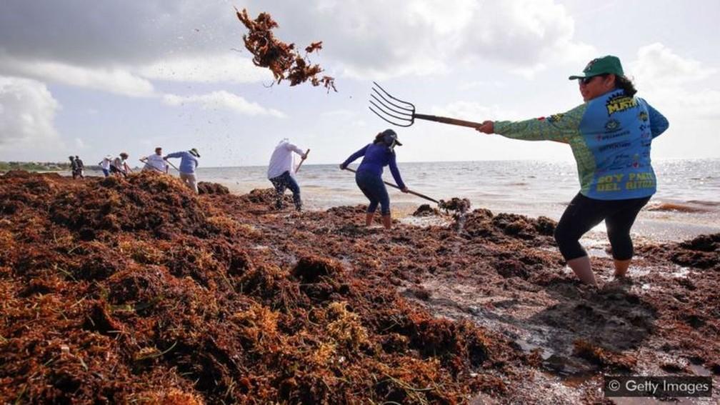 Moradores de cidades costeiras mexicanas enfrentam a difícil tarefa de tentar limpar os montes de sargaço manualmente — Foto: Getty Images