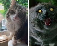 Família é assombrada com retorno de gato que teria sido cremado e web vê 'Cemitério Maldito' da vida real