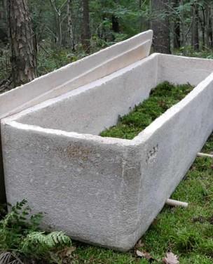 """Conheça """"caixão vivo"""" de fungos"""
