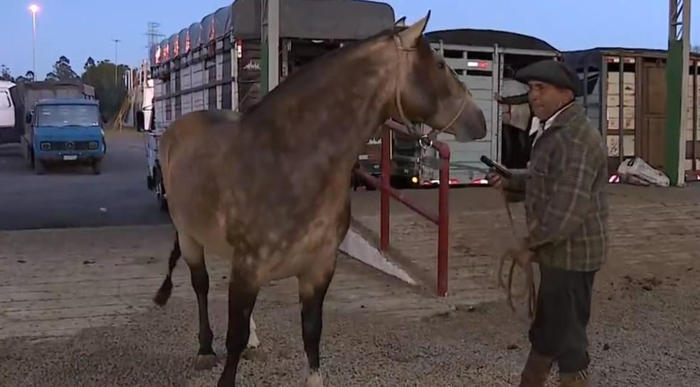 Animais começaram a chegar na manhã desta segunda ao parque da Expointer — Foto: Reprodução/RBS TV
