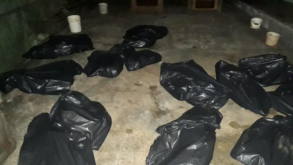 25 cachorros foram encontrados mortos em casa, em Londrina — Foto: Guarda Municipal de Londrina/Divulgação