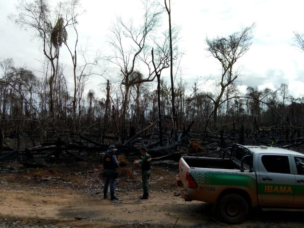 Proprietário foi multado em R$ 5 mil por cada hectare desmatado — Foto: Ibama/Divulgação
