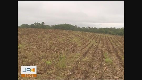 Produtores rurais do Sul têm prejuízos por causa da chuva