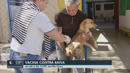 Cães e gatos são vacinados contra a raiva no 1º dia da campanha em Rio Claro