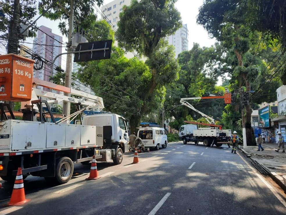Mangueira caiu em uma das principais vias de Belém— Foto: Carlos Brito/TV Liberal
