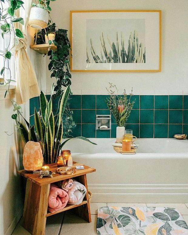 Plantas no home office aumentam a produtividade. Veja espécies indicadas (Foto: Divulgação)