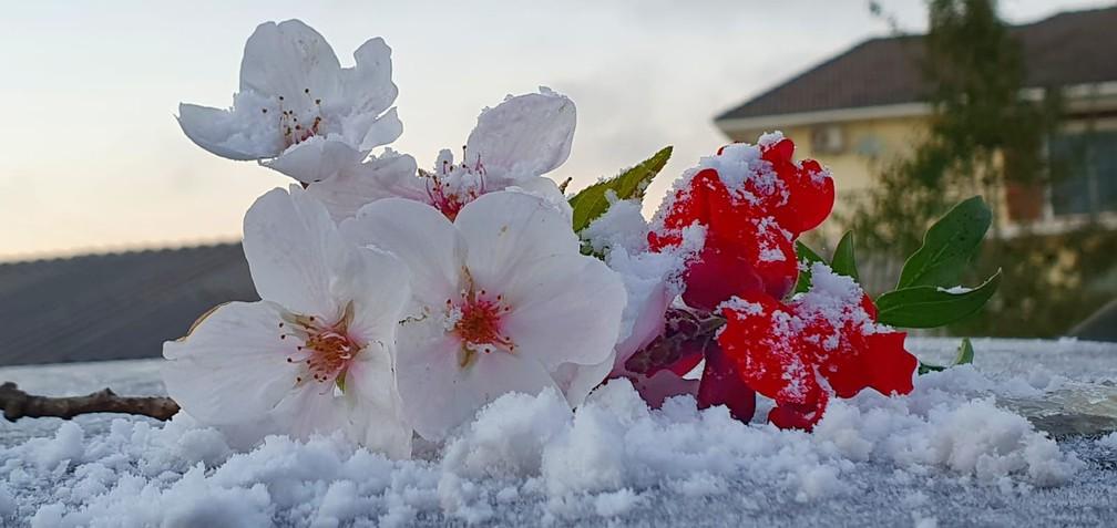 Primeiro dia de primavera começou com geada em SC, nas últimas horas da primavera — Foto: Mycchel Legnaghi/São Joaquim Online