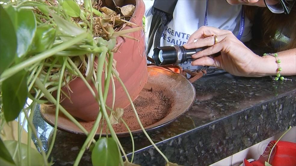 Agentes de saúde procuram criadouro de dengue em Rio Preto  — Foto: Reprodução/TV TEM