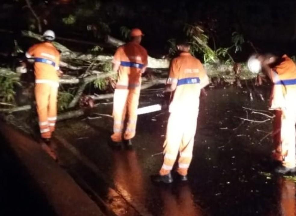 Árvore caiu em Guaratiba, na Zona Oeste — Foto: Reprodução/Centro de Operações