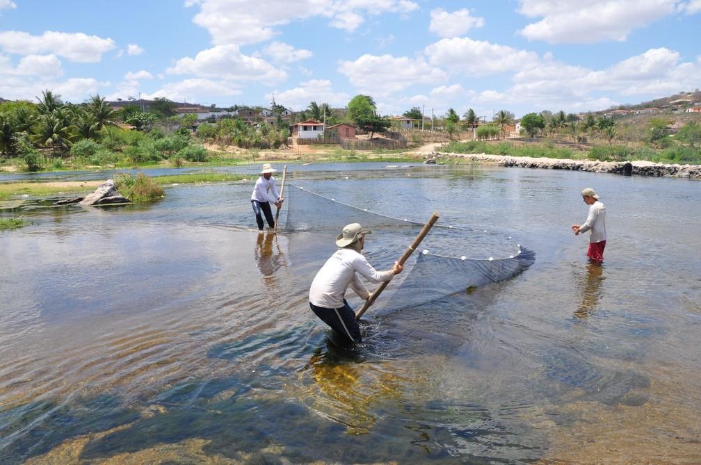 """Pesquisadores usam rede de """"arrasto"""" para capturar peixes sob influência da transposição do Rio São Francisco — Foto: Divulgação/Cemafauna/Univasf"""