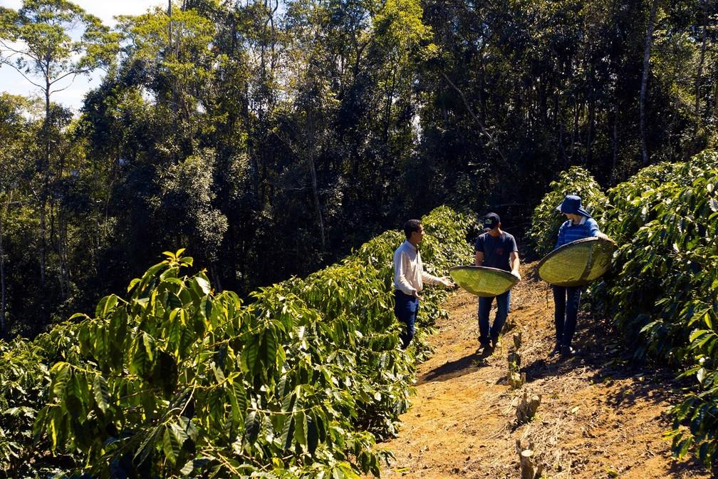 Edivan e Geisilane na plantação de café em Itarana com Giliarde Cardoso, gerente do negócio café da Coopeavi (Foto: Vinícius Gonçalves/ TV Gazeta)