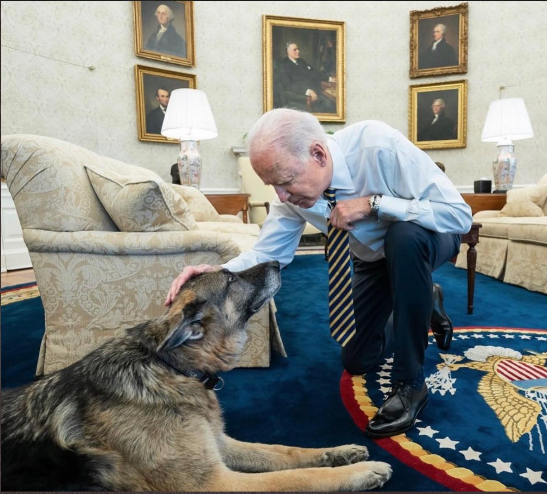 Cachorros de Joe Biden mordem segurança e são enviados de volta a Delaware