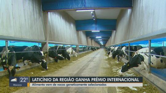 Fazenda de Descalvado recebe prêmio na Espanha por leite que não causa desconforto estomacal