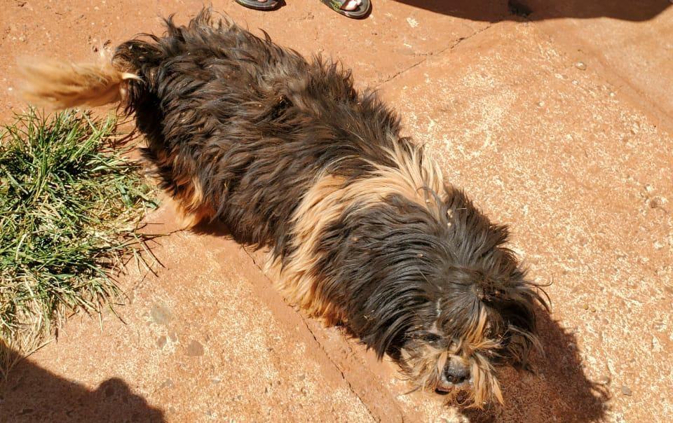 Polícia ambiental registra nova ocorrência de maus-tratos de cães em Ituiutaba
