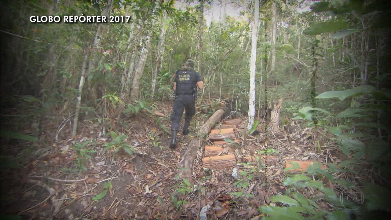 Bahia é o segundo estado com maior taxa de desmatamento no Brasil