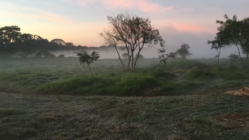 Campo em Dourados, na manhã desta quarta-feira (Foto: Martim Andrada/TV Morena)