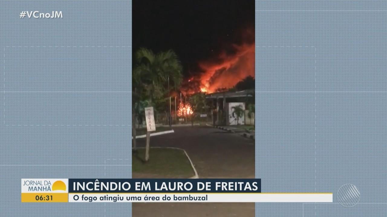Incêndio atinge área de bambuzal em Lauro de Freitas, na região metropolitana de Salvador