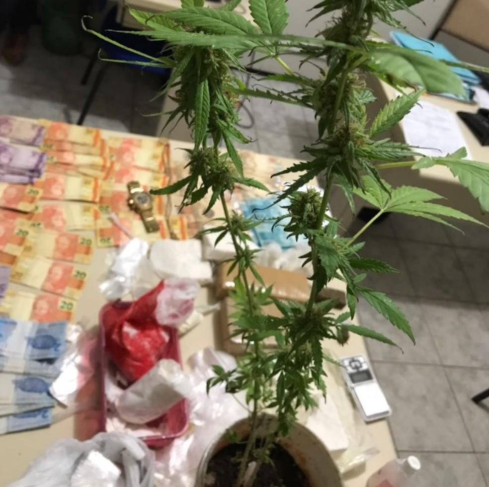 Polícia apreendeu drogas e um pé de maconha com o suspeito.  (Foto: Reprodução/Polícia Civil)